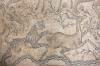 мозаїка - полювання леопарда, ts-img_7598fcp