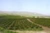 Йорданська долина - 10 км, z-dsc09972fc