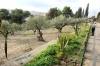 оливний сад, img_2029fc