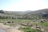 палестинські поселення, ts-img_9808fc