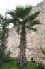 біля монастиря, tm-a2-769fc